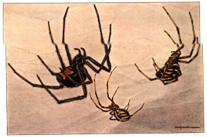 Controlling Spiders