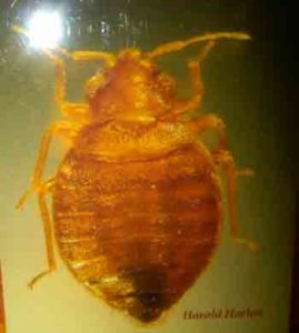 We are the bed bug experts in Hampton Roads
