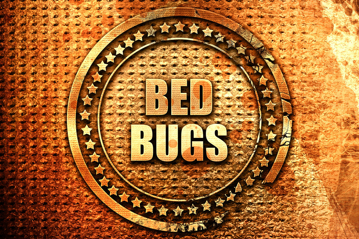 Bed Bugs - Treatment
